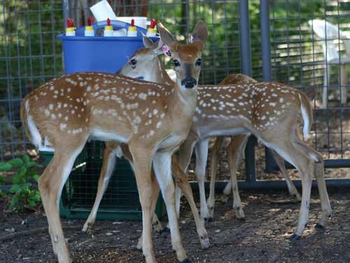 Deer Photos - 2010
